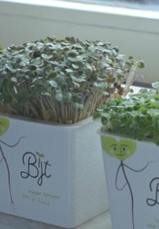 Lespakket 'Bijt – onderzoekend leren met kiemgroenten'