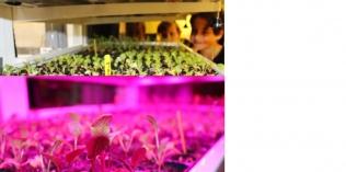 De Willibrordusschool brengt zelf gekweekte gewassen naar woonzorgcentrum De Aa